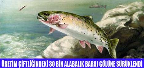30 BİN ALABALIK SELE KAPILDI