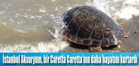 CARETTA CARETTA EVİNE DÖNÜYOR!