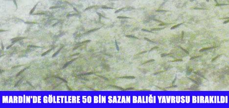 MARDİN'DE GÖLETLERE SAZAN YAVRUSU