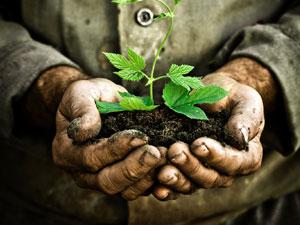 Türkiye'nin yerel tohum bankasını kuracak