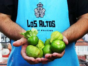 Meksika Restoranı Los Altos Seferihisar'da kendi tarlasını kurdu