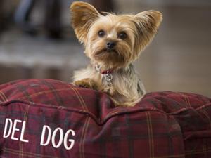 Hotels.com™ köpek dostu otelleri sizler için bir araya getirdi