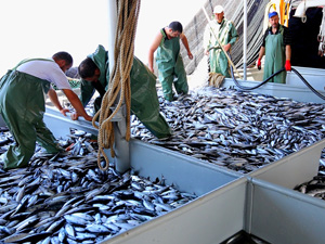 Trolle avlanma balık türlerini ve kapasitesinin her geçen gün azaltıyor