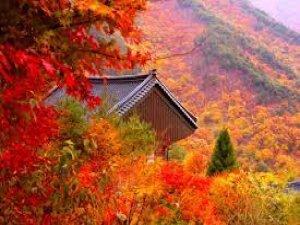 Sonbahar, Güney Kore'de bir başka güzel...
