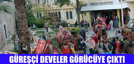 DEVE GÜREŞLERİNE DAVET