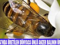 ANZER BALINDA VERİM DÜŞTÜ