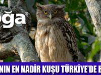 BALIK BAYKUŞU TÜRKİYE'DE YAŞIYOR
