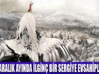PAT SWAİN KAPADOKYA'NIN TAVUKLARI