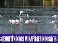 TÜRKİYE'DEKİ SU KUŞLARI SAYILIYOR