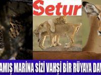 VAHŞİ DOĞA FOTOĞRAF SERGİSİ