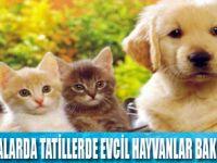 Evcil hayvanların bakımı nasıl yapılmalı?