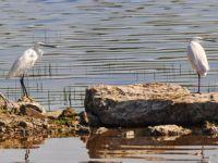 """Gelecek Turizmde ile Buldan'da """"Kuşlar Sizi Çağırıyor"""""""