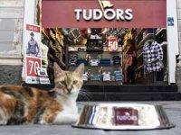 Tudors Gömlek Krallığı bu kez hayvan dostu bir yaklaşımla tüm markalara örnek oluyor
