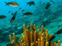 Akdeniz'de 5 yüz kilometreden fazla kıyı şeridinde iyileştirme ve iklim değişikliğine karşı koruma önlemleri alınacak