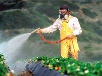 Avrupa Komisyonu, mevcut tarım sisteminde reform yaptı