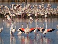 Gediz Deltası'nda Üreyen KuşAtlası Çalışması Tamamlandı