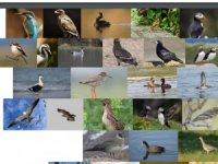 Avrupa Kuşları Kırmızı Listesi Güncellendi