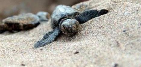 35.-deniz-kaplumbagalari-sempozyumu,caretta-carettalar,mugla-dalaman,2.jpg