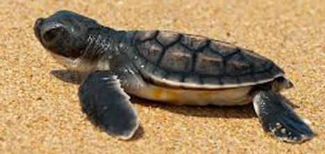 35.-deniz-kaplumbagalari-sempozyumu,caretta-carettalar,mugla-dalaman,4.jpg