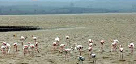 kuruyan-tuz-golunde-flamingolar-caresizlikten-ureyemedi,3.jpg