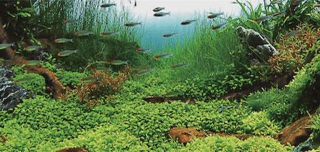 yesil-doga-akvaryum,0216-316-24-61,0530-461-24-,murat-yilmaz-,akin-basyurt,akvaryum1.jpg