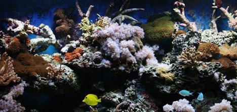 yesil-doga-akvaryum,0216-316-24-61,0530-461-24-,murat-yilmaz-,akin-basyurt--2222.jpg