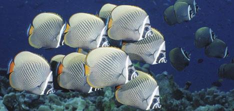 yesil-doga-akvaryum,0216-316-24-61,0530-461-24-,murat-yilmaz-,akin-basyurt-111.jpg